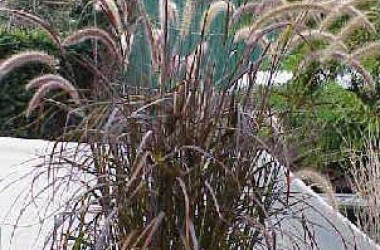 Grasses Collection (5 plants)