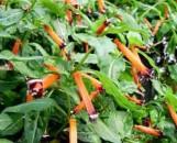 Cuphea micropetala Granada Orange
