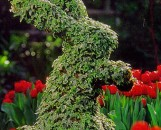 Topiary Moss Frame Plants
