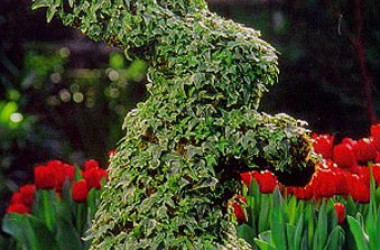 Topiary Moss Frame Plants (5 Plants)