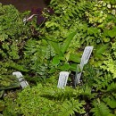 Terrarium Plant Collections