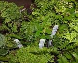 Terrarium Collection (10 Plants)