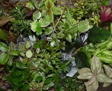 Terrarium Collection: Rare Selections (5 Plants)