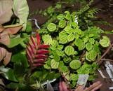 Terrarium / Vivarium Collection (5 Plants)
