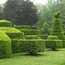 Standards & Topiary