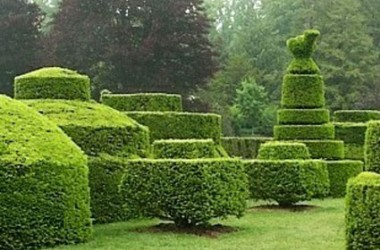 Standards & Topiary Collection (5 Plants)