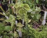 Terrarium: Wardian Case Collection (10 Plants)