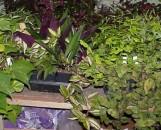 Greenhouse Collection: Beginner & Hobbyist