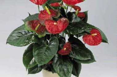 Winter Bloomers Collection II (10 Plants)