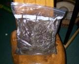 Soilless Potting Mix Hobby Bag