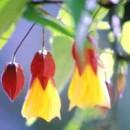 Hummingbirds & Butterflies